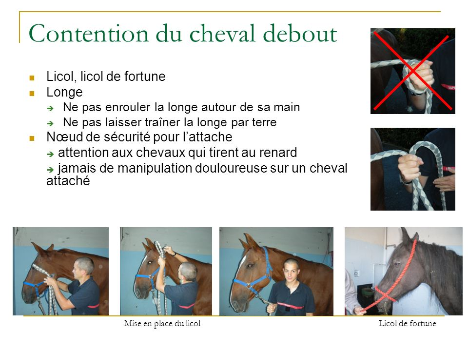 Contention du cheval debout