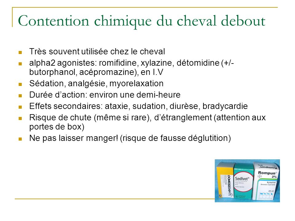 Contention chimique du cheval debout