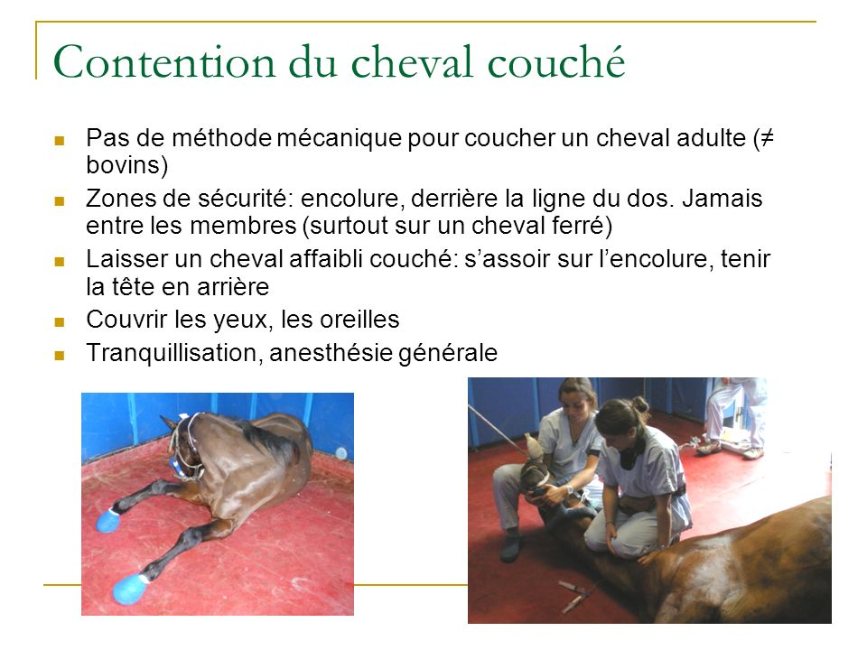 Contention du cheval couché