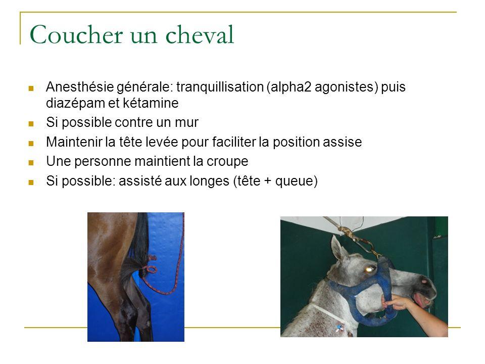Coucher un cheval Anesthésie générale: tranquillisation (alpha2 agonistes) puis diazépam et kétamine.