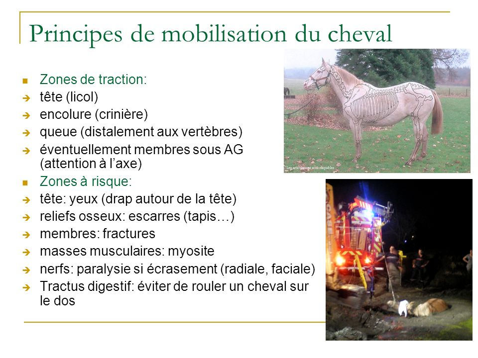 Principes de mobilisation du cheval