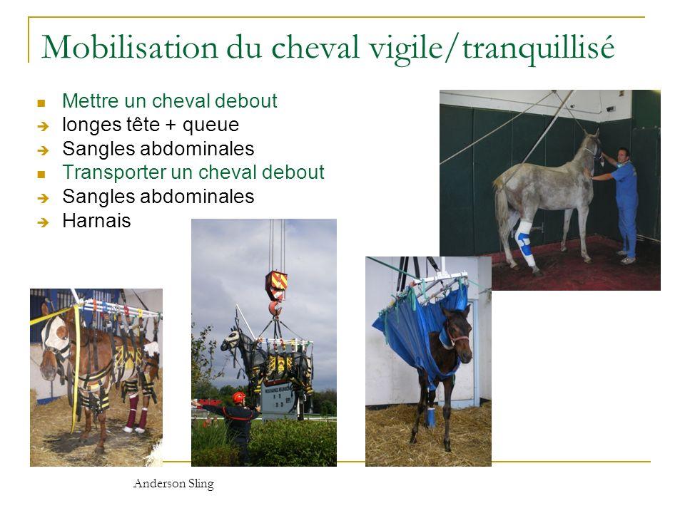 Mobilisation du cheval vigile/tranquillisé