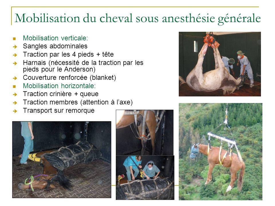 Mobilisation du cheval sous anesthésie générale