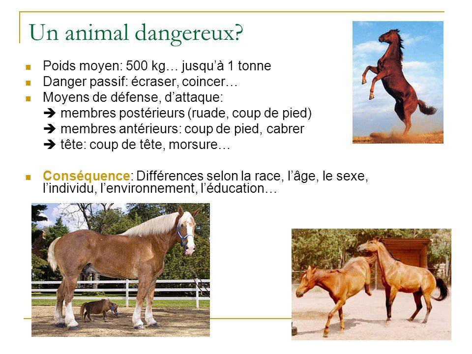 Un animal dangereux Poids moyen: 500 kg… jusqu'à 1 tonne