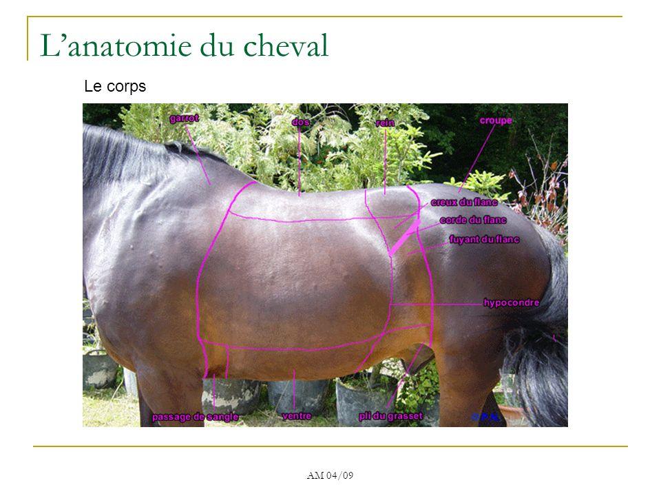 L'anatomie du cheval Le corps AM 04/09