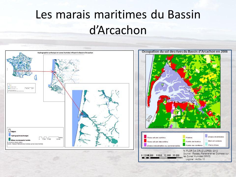 Les marais maritimes du Bassin d'Arcachon