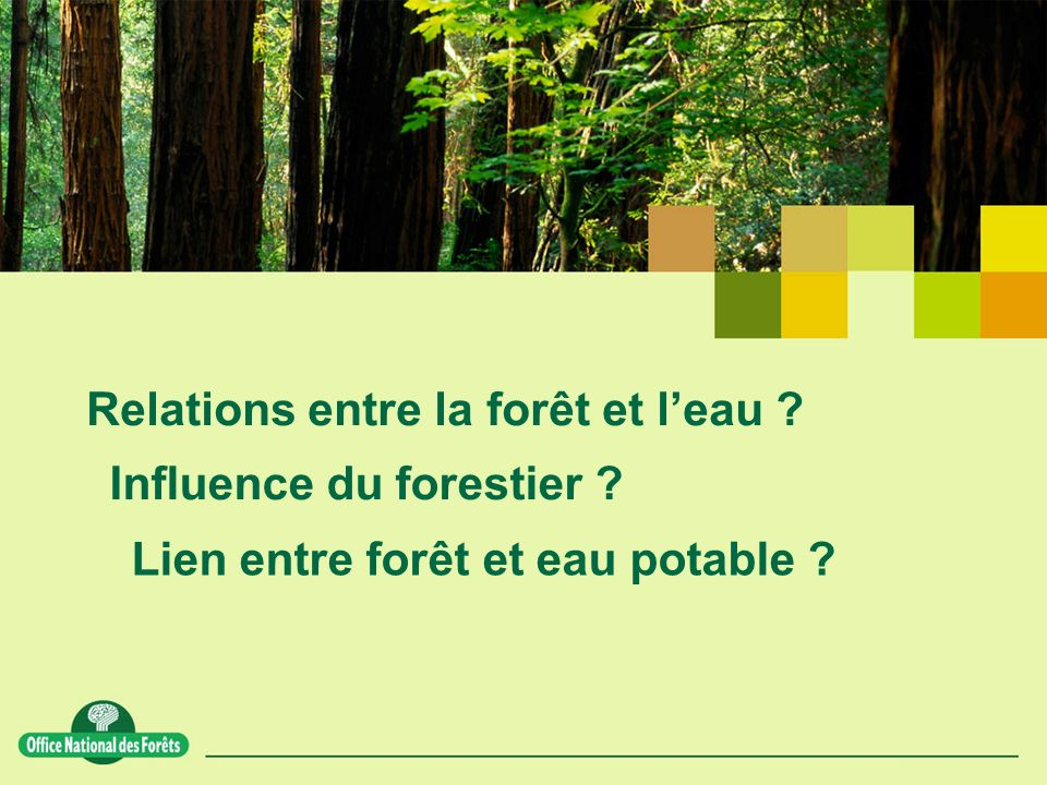 Relations entre la forêt et l'eau