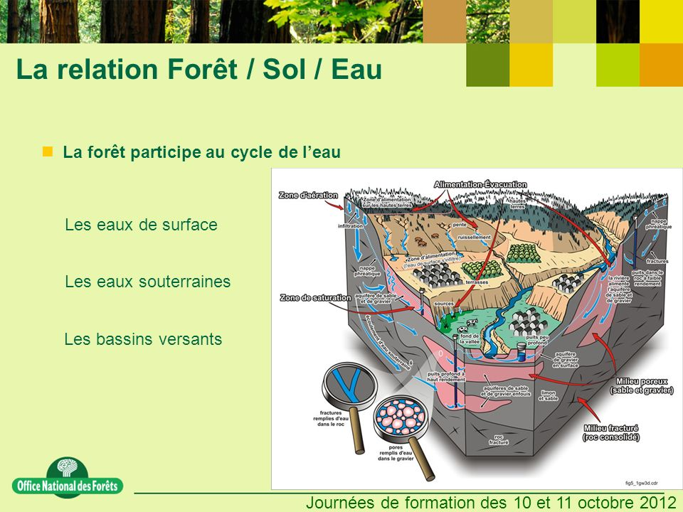 La relation Forêt / Sol / Eau