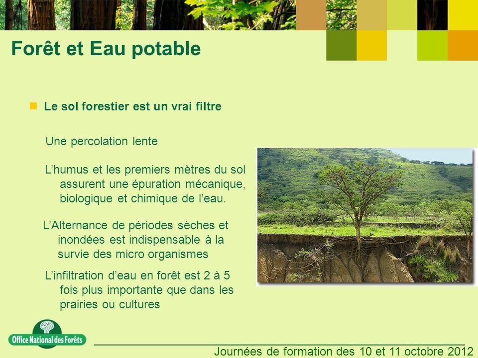 Forêt et Eau potable Le sol forestier est un vrai filtre