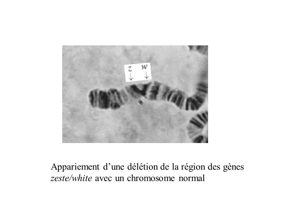 Appariement d'une délétion de la région des gènes