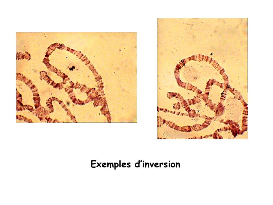 Exemples d'inversion