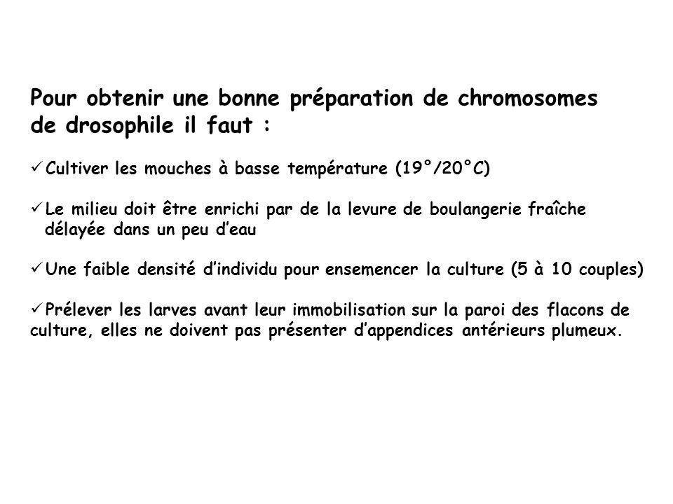 Pour obtenir une bonne préparation de chromosomes