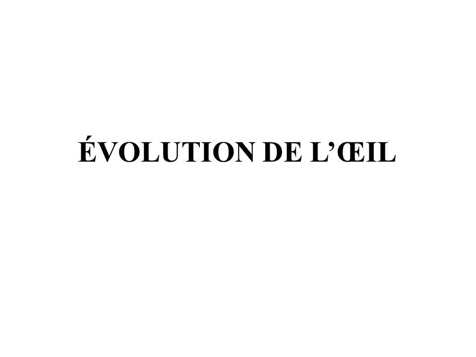 ÉVOLUTION DE L'ŒIL