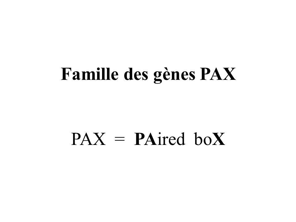 Famille des gènes PAX PAX = PAired boX