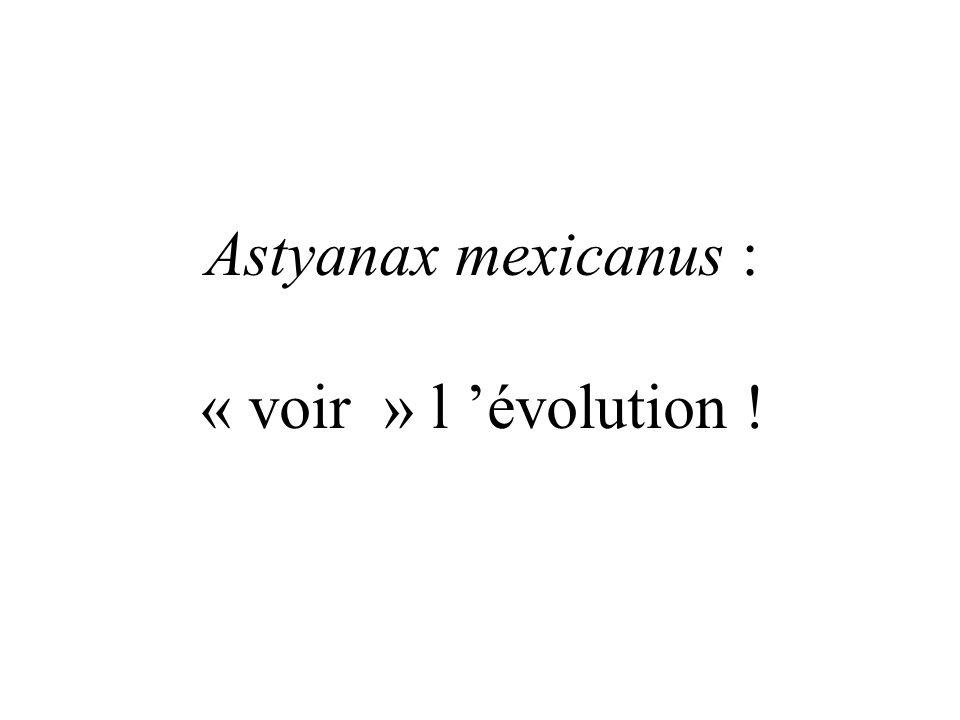 Astyanax mexicanus : « voir » l 'évolution !