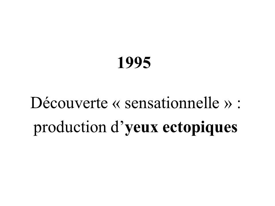 Découverte « sensationnelle » : production d'yeux ectopiques