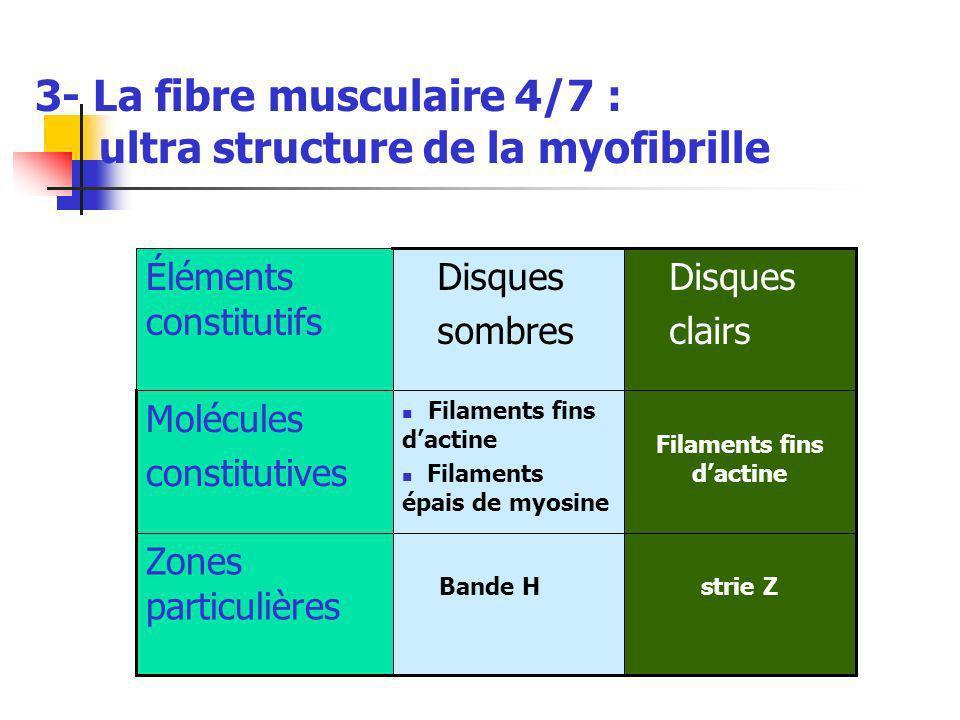 3- La fibre musculaire 4/7 : ultra structure de la myofibrille