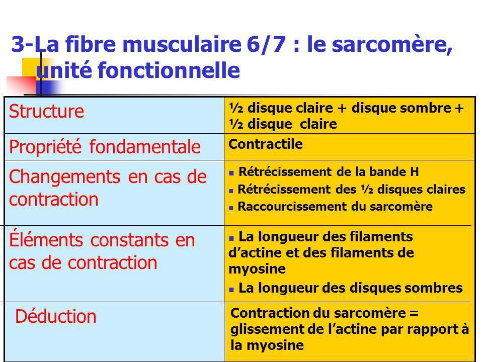 3-La fibre musculaire 6/7 : le sarcomère, unité fonctionnelle