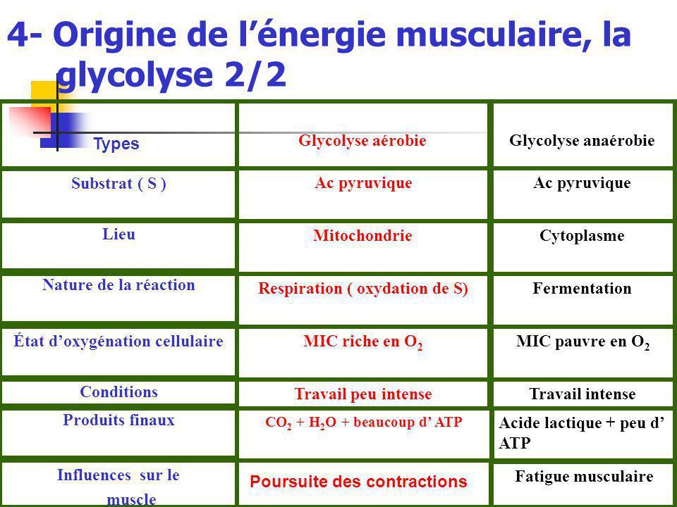 4- Origine de l'énergie musculaire, la glycolyse 2/2