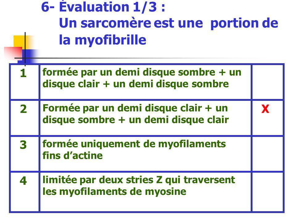 6- Évaluation 1/3 : Un sarcomère est une portion de la myofibrille