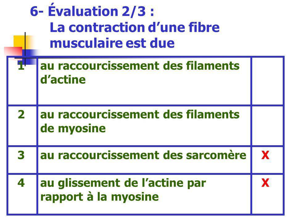 6- Évaluation 2/3 : La contraction d'une fibre musculaire est due