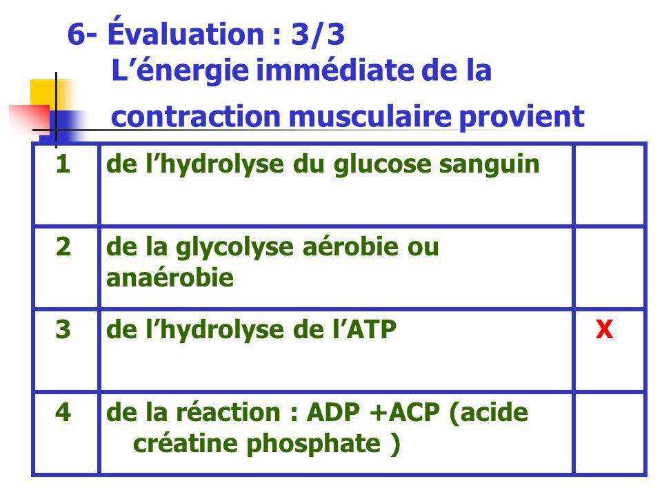 6- Évaluation : 3/3 L'énergie immédiate de la contraction musculaire provient