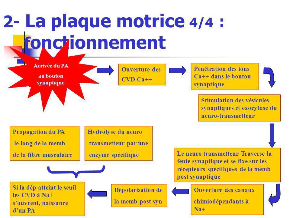 2- La plaque motrice 4/4 : fonctionnement