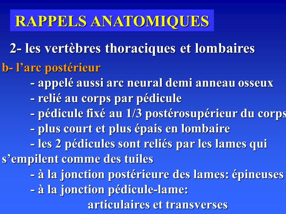 RAPPELS ANATOMIQUES 2- les vertèbres thoraciques et lombaires
