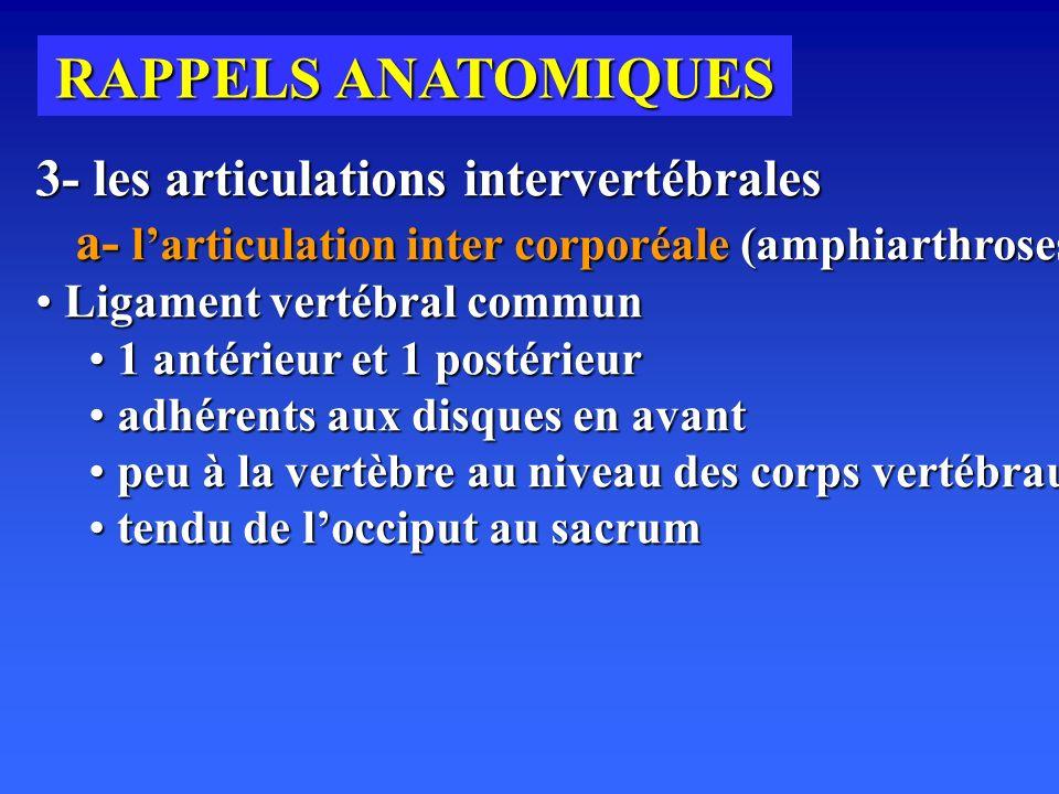 RAPPELS ANATOMIQUES 3- les articulations intervertébrales a- l'articulation inter corporéale (amphiarthroses)