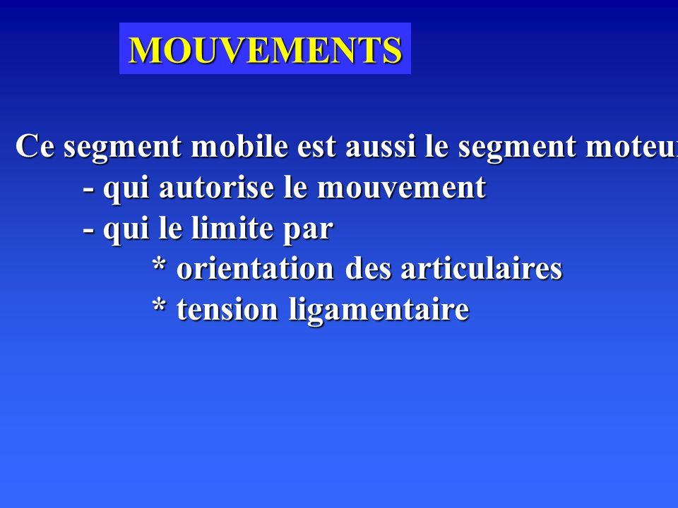 MOUVEMENTS Ce segment mobile est aussi le segment moteur