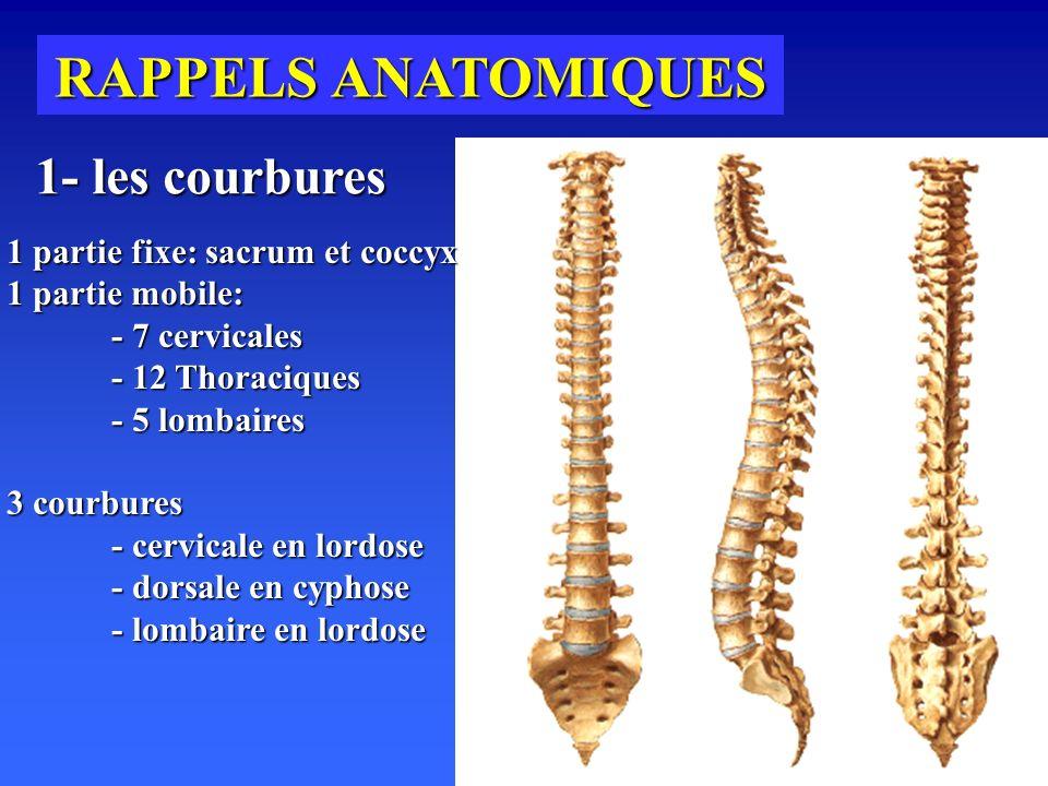 RAPPELS ANATOMIQUES 1- les courbures 1 partie fixe: sacrum et coccyx