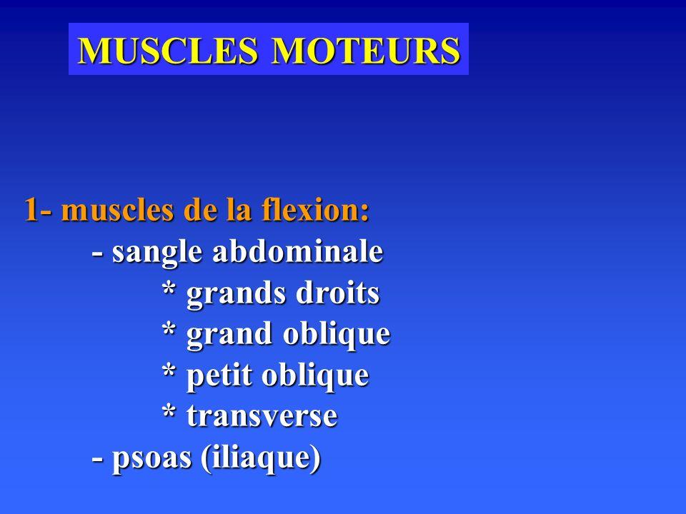 MUSCLES MOTEURS 1- muscles de la flexion: - sangle abdominale