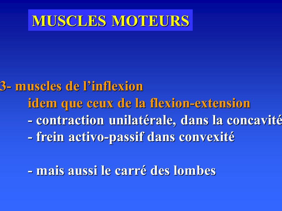 MUSCLES MOTEURS 3- muscles de l'inflexion
