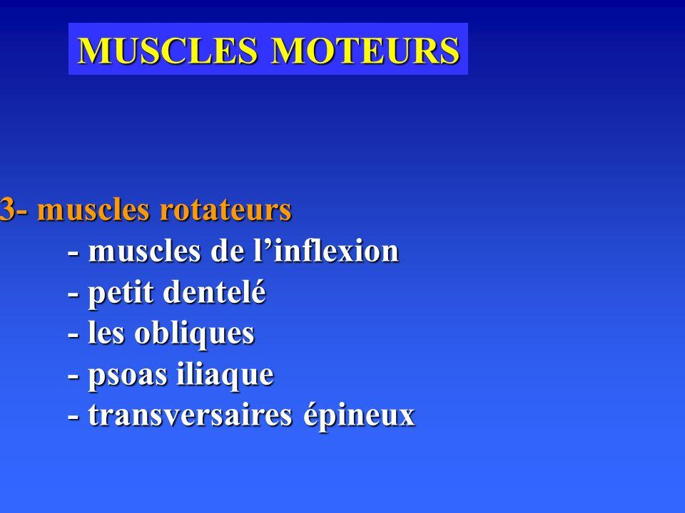MUSCLES MOTEURS 3- muscles rotateurs - muscles de l'inflexion