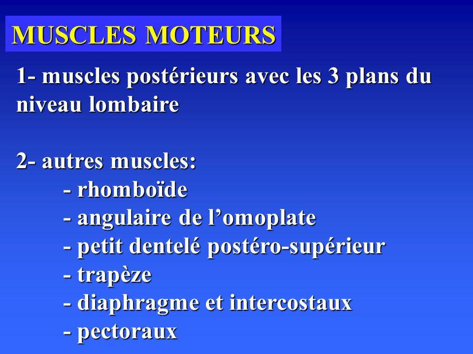 MUSCLES MOTEURS 1- muscles postérieurs avec les 3 plans du niveau lombaire. 2- autres muscles: - rhomboïde.