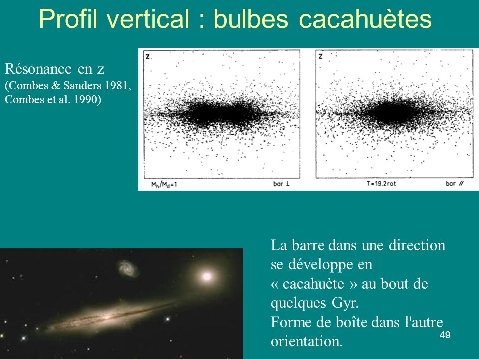 Profil vertical : bulbes cacahuètes