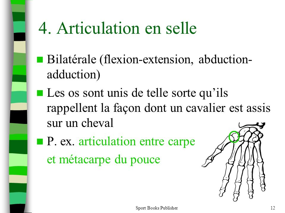 4. Articulation en selle Bilatérale (flexion-extension, abduction-adduction)