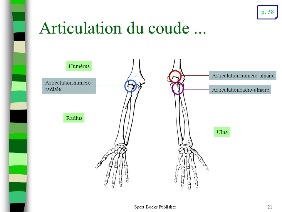 Articulation du coude ... p. 38 Humérus Articulation huméro-ulnaire
