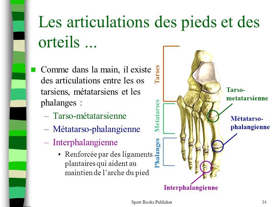 Les articulations des pieds et des orteils ...