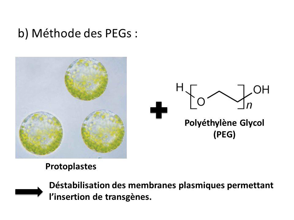 Polyéthylène Glycol (PEG)