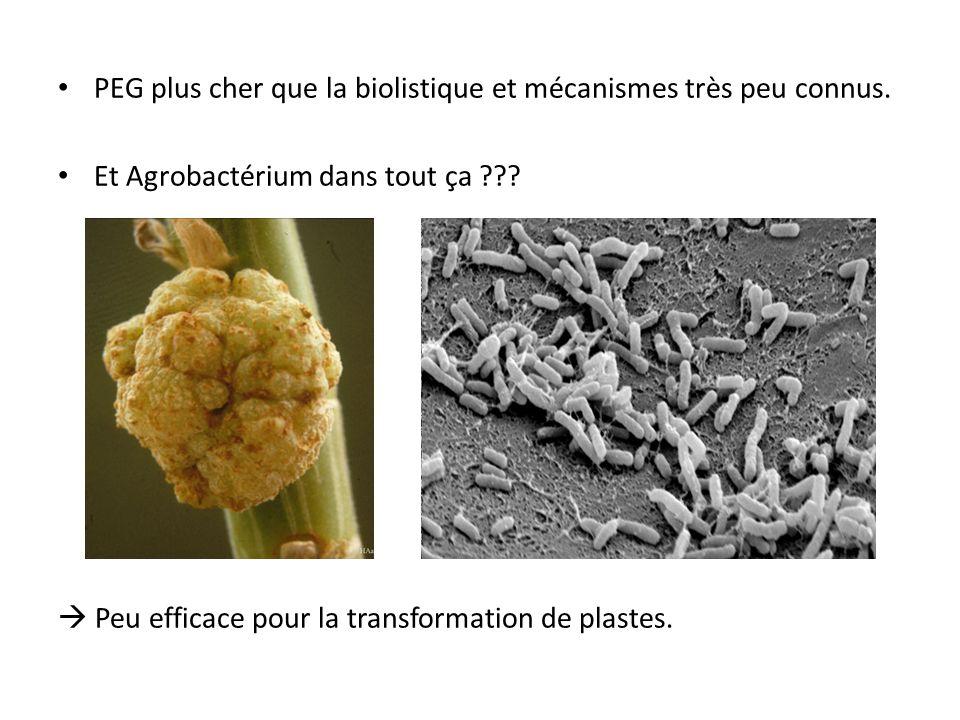 PEG plus cher que la biolistique et mécanismes très peu connus.