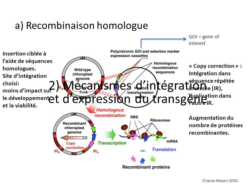 2) Mécanismes d'intégration et d'expression du transgène