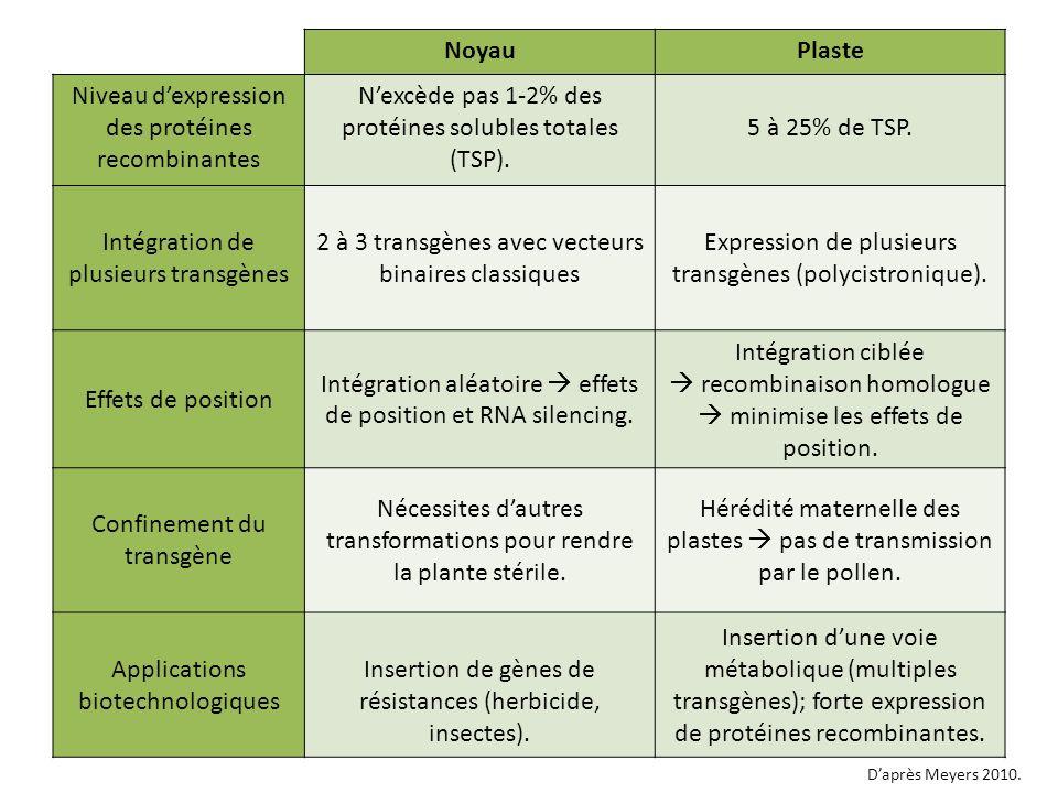 Niveau d'expression des protéines recombinantes