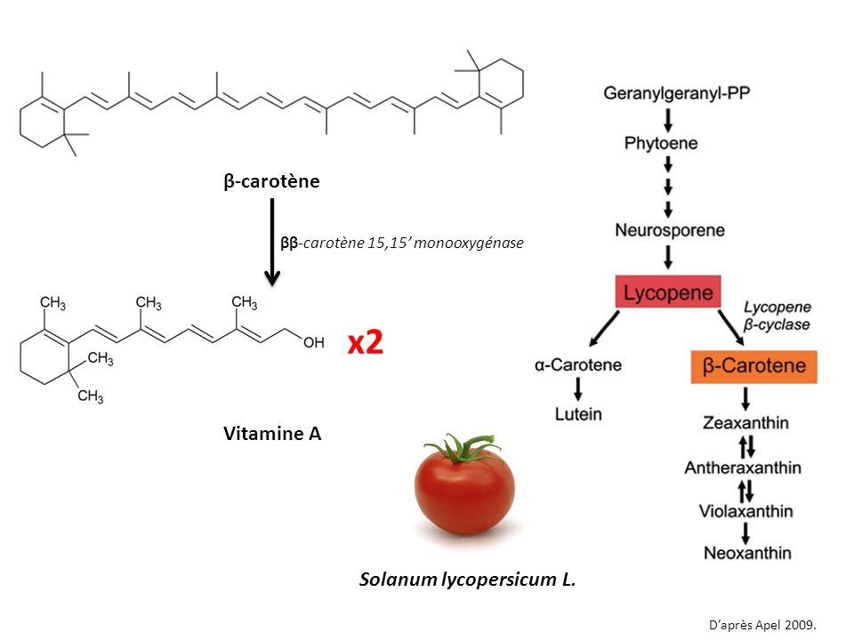 x2 β-carotène Vitamine A Solanum lycopersicum L.