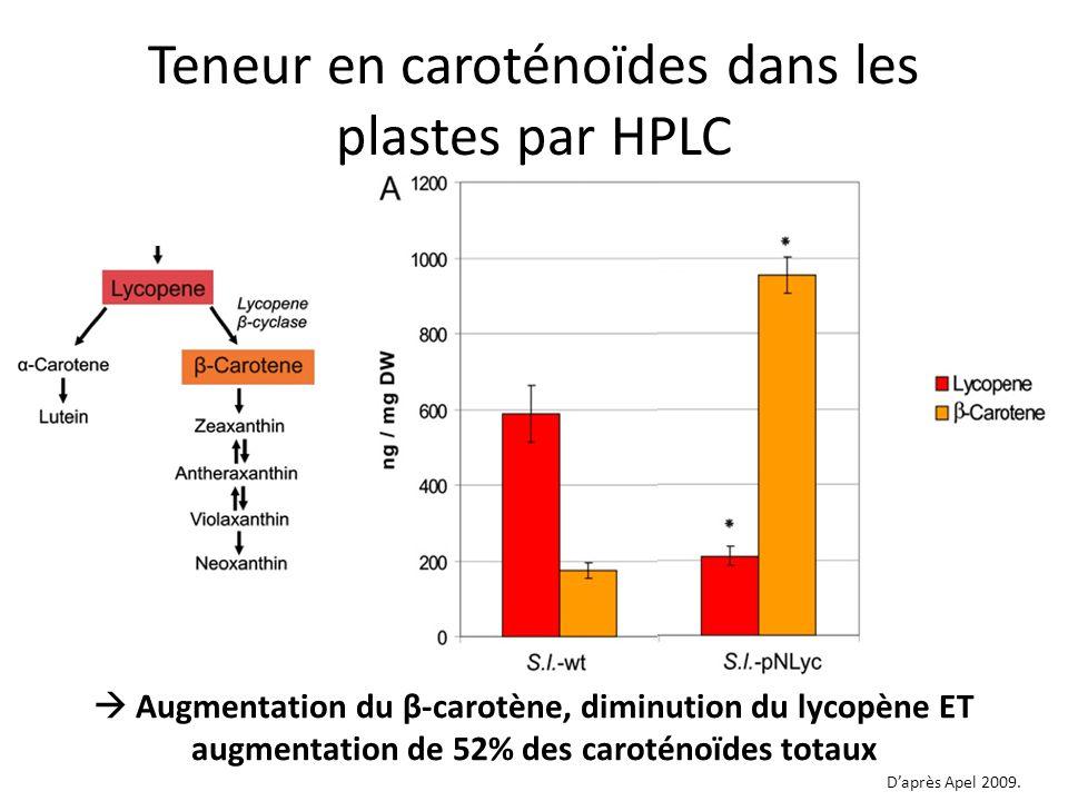 Teneur en caroténoïdes dans les plastes par HPLC