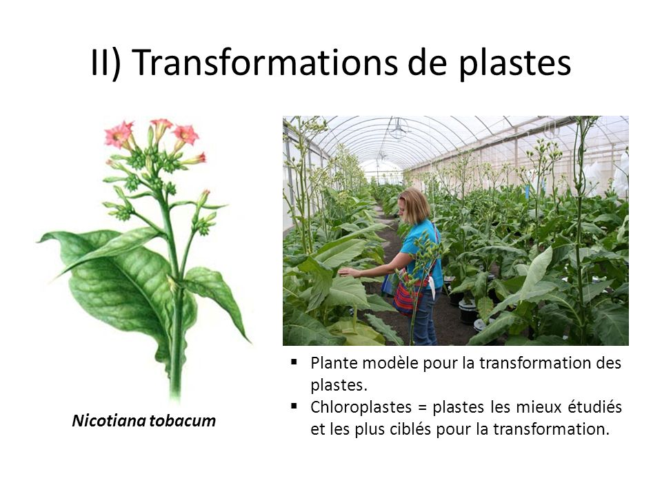 II) Transformations de plastes