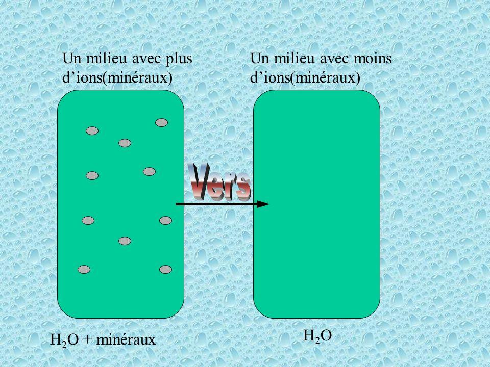Vers Un milieu avec plus d'ions(minéraux)