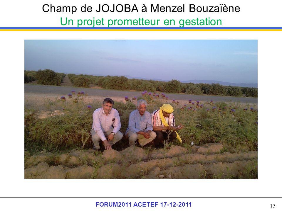 Champ de JOJOBA à Menzel Bouzaïène Un projet prometteur en gestation