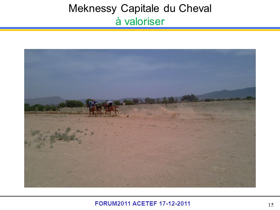 Meknessy Capitale du Cheval à valoriser