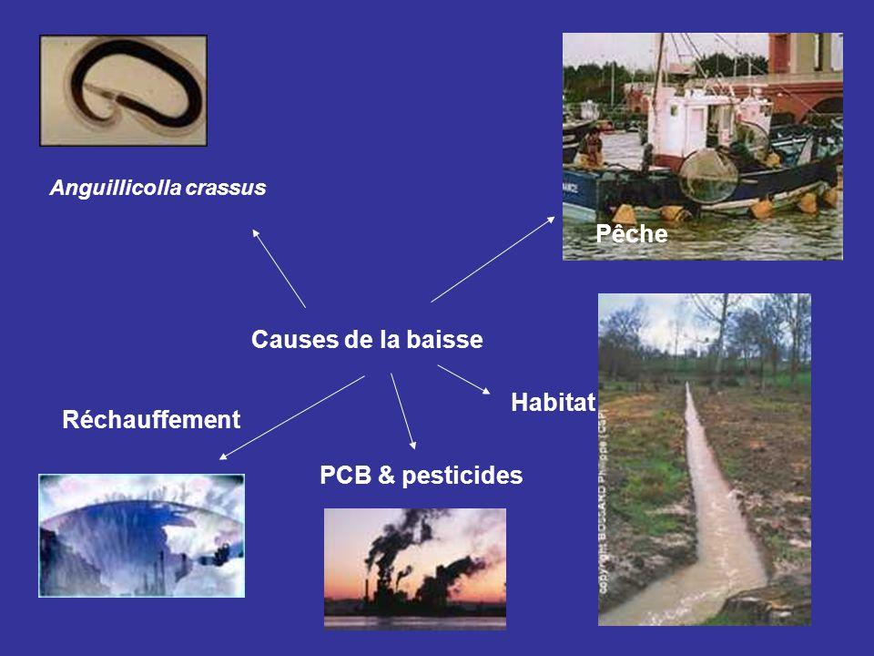 Pêche Causes de la baisse Habitat Réchauffement PCB & pesticides